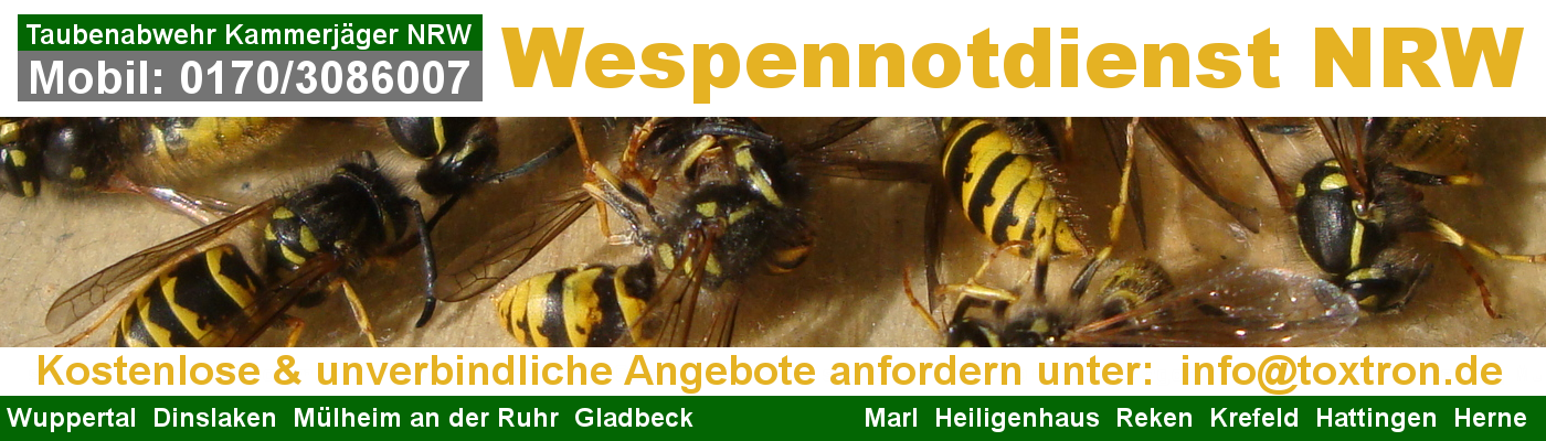Wespenbekämpfung NRW