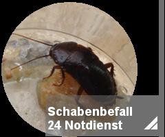 schabenfall_24h_notdienst_toxtron