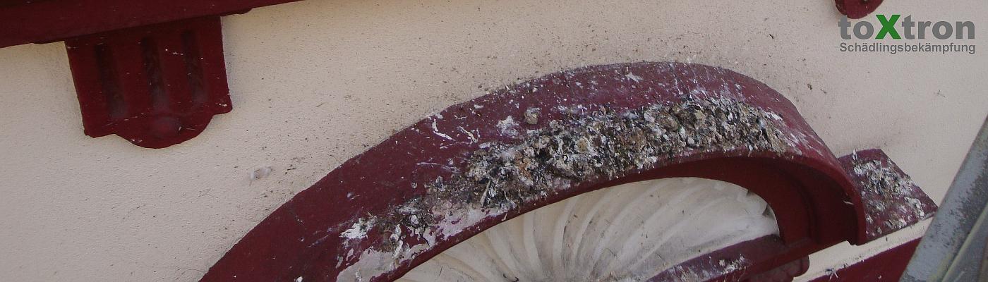 taubenkot-entfernen-fasassaden-toxtron