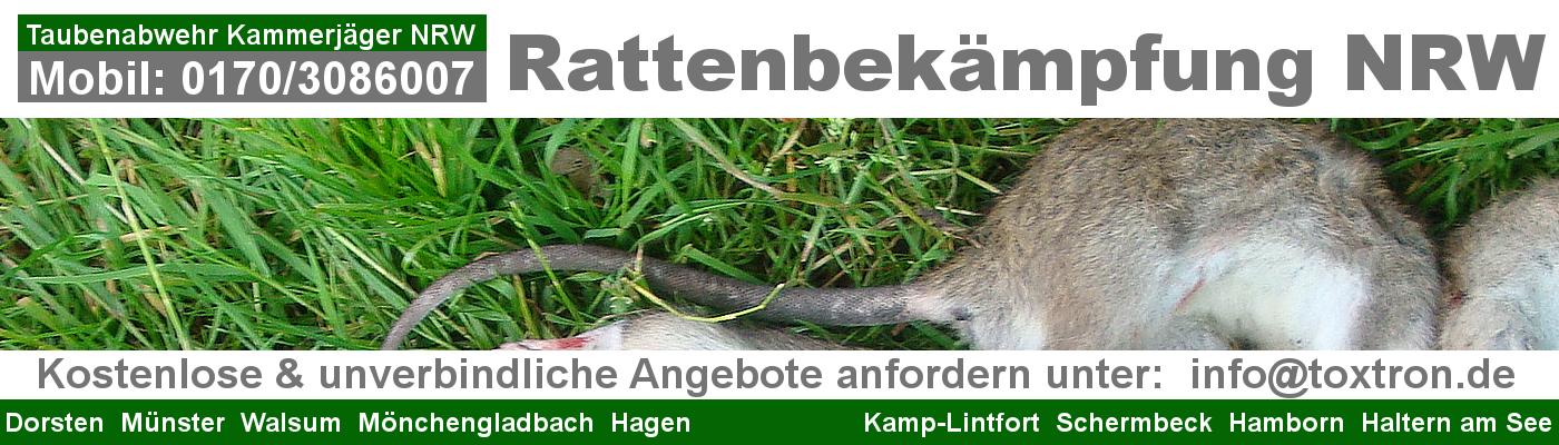 Ratten Notdienst NRW